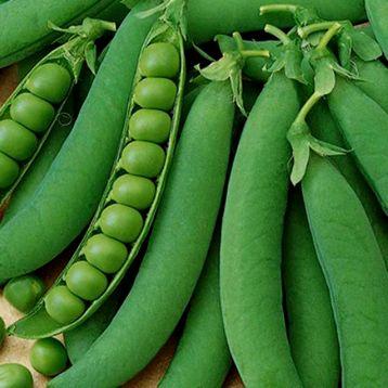 Горох овочевий Джі 12
