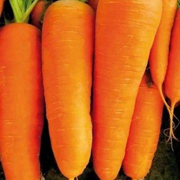 Морковь СВ 7381 ДХ F1 (SV 7381 DH F1) (2,2-2,4)