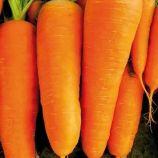 СВ 7381 ДХ F1 (SV 7381 DH F1) (2,2-2,4) семена моркови Шантане средней 110-115 дн. 16-18 см (Seminis)