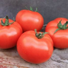 Монсан F1 семена томата полудет. ультрараннего 75 дн. окр. 160-180 г (Enza Zaden)