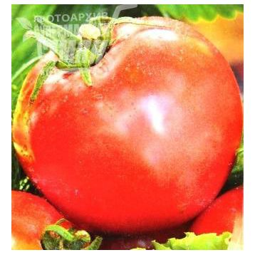 Иваныч F1 семена томата полудет розового (Элитный ряд)