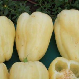Милица F1 семена перца сладкого раннего 70-75 дн. крем./св. оранж. конич. (Enza Zaden) НЕТ ТОВАРА