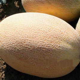 Оксана F1 семена дыни тип Ананас ранней 5-6 кг овал. оран./бел. (Enza Zaden)