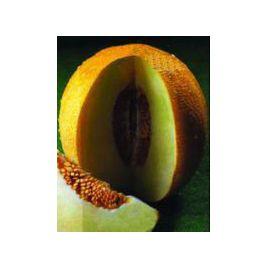 Приднестровская семена дыни ранней 70-75 дн. 0,7-1,8 кг овал. оран./бел. (Элитный ряд)
