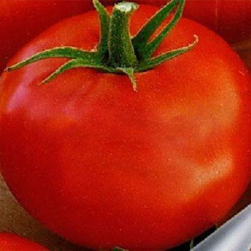 Томат Атаман F1 семена томата Элитный ряд [ детерминантный, ранний] - купить, цена в Супермаркет Семян