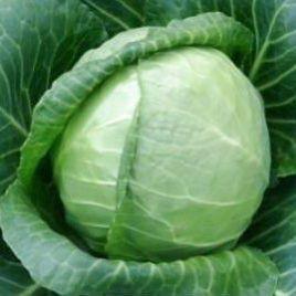 Сунта F1 семена капусты б/к ранней 55-58 дн. 1-2 кг (Takii Seed)