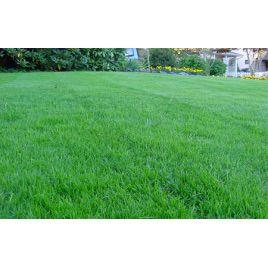 Газонная трава Придорожная (RAGT)