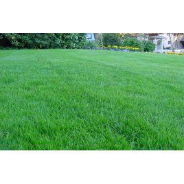 Придорожная семена газонной травы (RAGT) НЕТ СЕМЯН