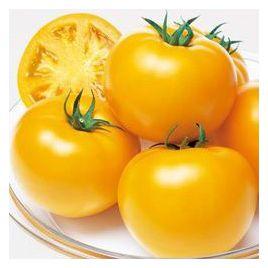 Маматаро Голд (Ti–169) F1 семена томата индет. окр.-припл. 220-300 гр. желт. (Takii Seeds)
