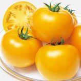 Маматаро Голд (Ti–169) F1 насіння помідора індетермінантного (Takii Seeds)