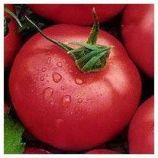 Розовая Андромеда F1 семена томата индет розового (Элитный Ряд)