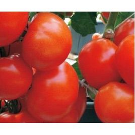 Вакула F1 семена томата дет (Элитный Ряд)