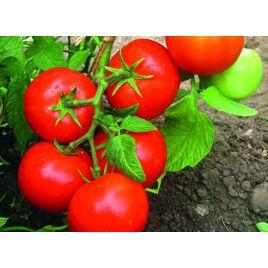 Гибрид-161 F1 семена томата дет. 200-250г (Элитный Ряд) НЕТ СЕМЯН