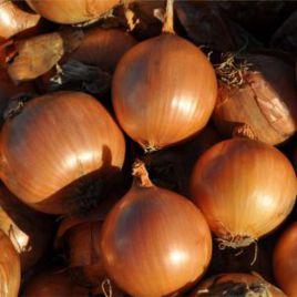 Витало F1 семена лука репчатого среднего (Hazera) СНЯТО С ПРОИЗВОДСТВА