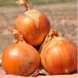 Каладо F1 семена лука репчатого позднего (Hazera) СНЯТО С ПРОИЗВОДСТВА