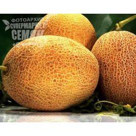 Амалик F1 (Армония F1) семена дыни тип Ананас ранней 50-55 дн 2-2,5 кг овал. оран./бел.(United Genetics)