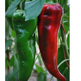 Армагеддон F1 семена перца сладкого тип Каппи раннего длин.кон. 150-170г. 22-24 см зел./красн. (Yuksel)