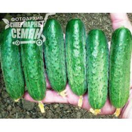 Стингер F1 семена огурца партенокарп. среднераннего 47-50 дн. 12-14 см (Lark Seeds)