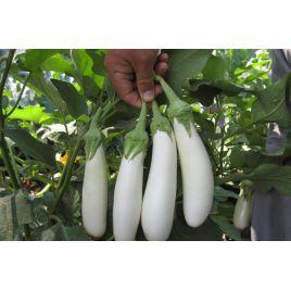 Моби Дик F1 семена баклажана тип Алмаз раннего 300 гр. 20-22 см белого (Erste Zaden) НЕТ ТОВАРА