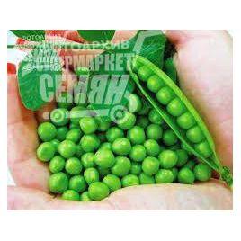 Тиара семена гороха овощного раннего 50-55 дн (Lark Seeds)