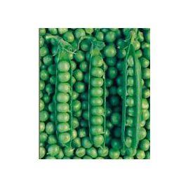 Болеро семена гороха овощного раннего 65 дн (May Seeds) НЕТ СЕМЯН