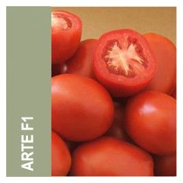 Арте F1 семена томата дет. 100-110 гр. (May Seeds) НЕТ ТОВАРА