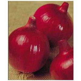 Зенит F1 семена лука репчатого красного среднего (May Seeds) НЕТ СЕМЯН