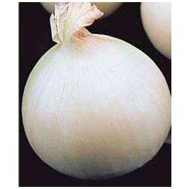 Саварона F1 семена лука репчатого среднего белого (May Seeds) НЕТ СЕМЯН