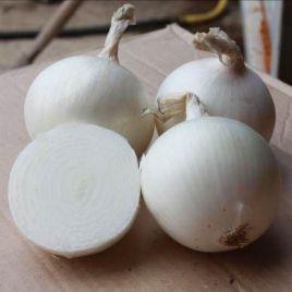 Пегас F1 семена лука репчатого среднего 105-110дн. белого (Гавриш) НЕТ СЕМЯН
