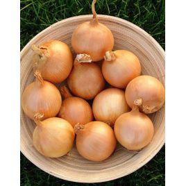 ГВР 0712 (GVR 0712) F1 семена лука репчатого среднего (Гавриш) НЕТ СЕМЯН