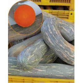 Лунга Пиена ди Наполи семена тыквы твердокорой до 35 кг (Hortus)