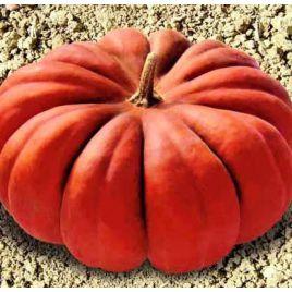 Мускат де Прованс насіння гарбуза (Euroseed)