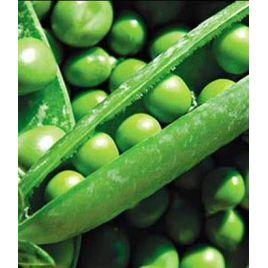Кельведонское чудо семена гороха овощного лущильного раннего 55-65 дн (Satimex КЛ)