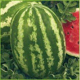 Кадия F1 семена арбуза тип Кримсон Свит 58-62 дня 9-11 кг (Гавриш) НЕТ ТОВАРА