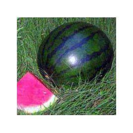 Сорбет F1 семена арбуза бессемянного раннего 70-75 дн 3,5-4 кг (SAIS)