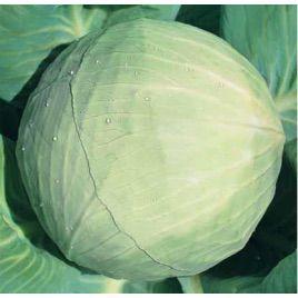 Белоснежка семена капусты б/к поздней 150-155 дн. 3-4 кг (Hortus)