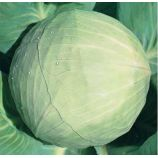 Белоснежка семена капусты б/к поздней 150-155 дн. 3-4 кг окр-прип. (Hortus)