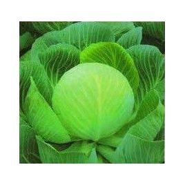 Лангедейкер Децема семена капусты б/к поздней 130-140 дн 2-3,5 кг (Satimex)