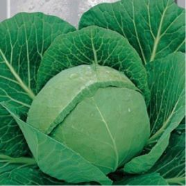 Тюркис семена капусты б/к поздней 130-150 дн 2-3,5 дн (Satimex)