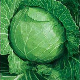 Харьковская зимняя семена капусты б/к поздней 150-160 дн. 1,9-3,5 кг (Hortus)