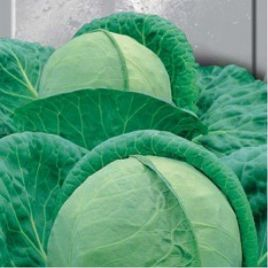 Ярославна семена капусты б/к поздней 160-165 дн. 3,5-4 кг (Hortus)