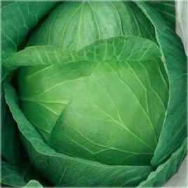 Ярославна семена капусты б/к поздней (Euroseed)