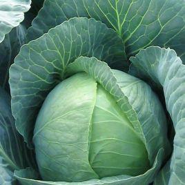 Брауншвайгер семена капусты б/к среднеспелой 85-100 дн. 2,5-3 кг (Hortus)