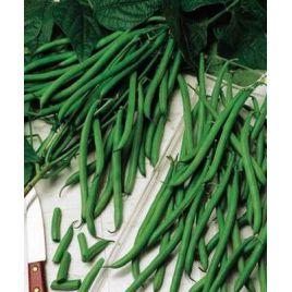 Скуба семена фасоли спаржевой кустовой средней 80 дн. зел. (Satimex КЛ)