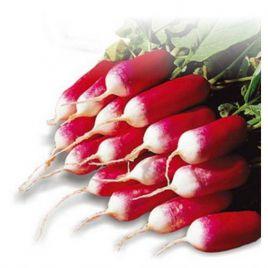 Дует семена редиса с БК цилинд. 25 дн. (Hortus)