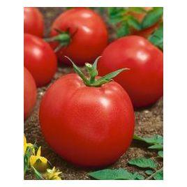 Адаптор F1 семена томата дет. 90-120 гр. (Гавриш) НЕТ ТОВАРА