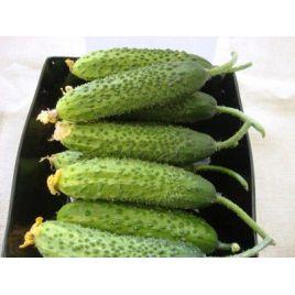 Атаман F1 семена огурца партенокарп. раннего 41-46 дн. 14-16 см (Гавриш)