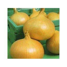 Штутгартер семена лука репчатого среднего (Hortus)
