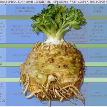Каталог СЕЛЬДЕРЕЯ и ПАСТЕРНАКА от Супермаркета Семян электронный