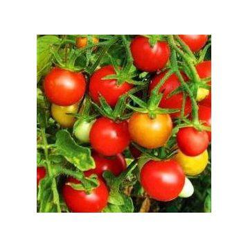 Колибри семена томата индет черри (Элитный ряд)